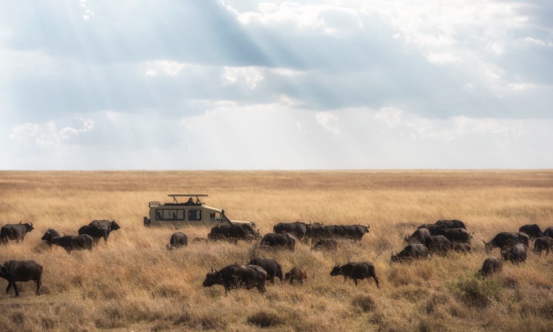 wildlife ngorongoro crater tanzania safari