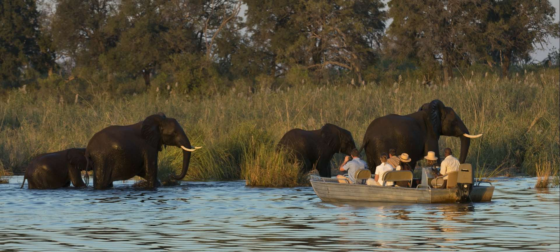 Elephant wading in the Zambezi River