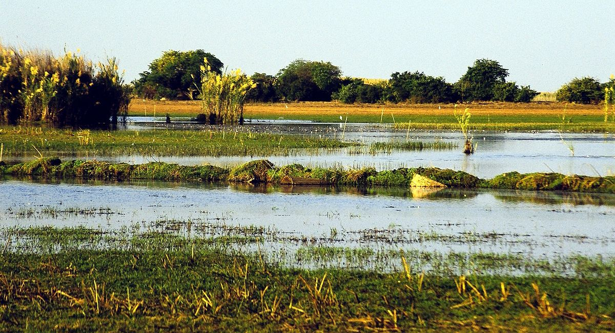 Lake Bangweulu is a haven for birdlife, credit: Wikipedia