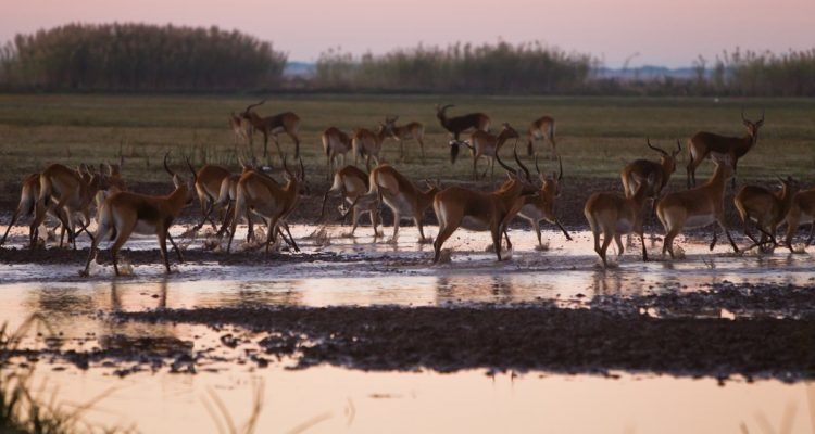 Northwest of the Luangwa Valley, the Bangweulu Wetlands are also excellent in June, credit: Foundation Segre